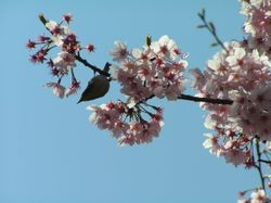 Bird and blossom