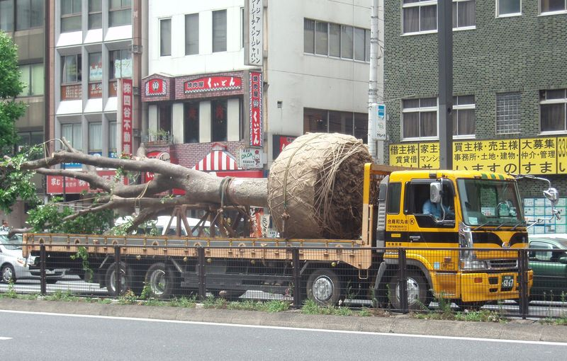 Tree on a lorry