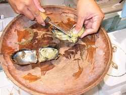 800px-Pearl_Oysters