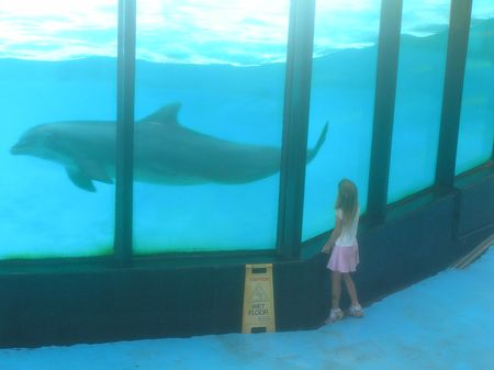 Sealife Centre dolphin