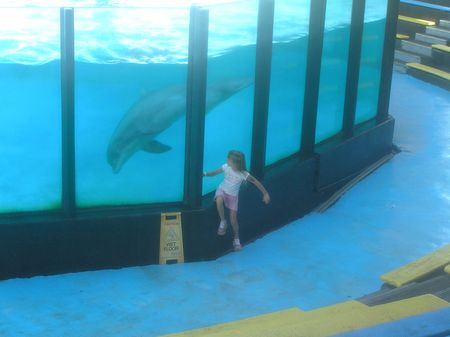 Sealife Centre dolphin1