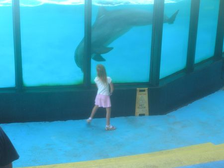 Sealife Centre dolphin greeting