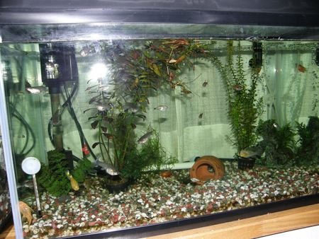 Fish tales japanory for Cold water fish tanks