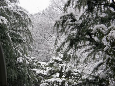 Garden in snow2