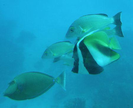 Fish sml