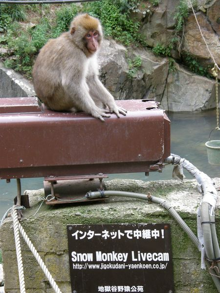 Monkey livecam