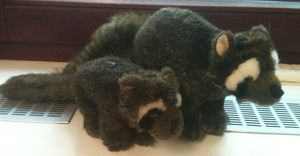 Two raccoons!
