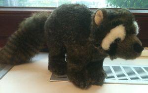 New raccoon