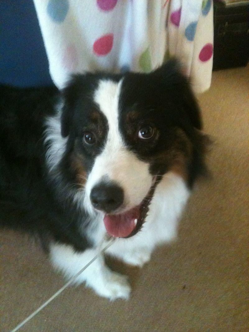 Dog photo2