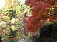Autumn_lake