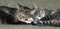 Cosy_cats_2