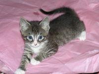 Inti_as_a_kitten